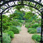 Idealne rośliny do przydomowego ogrodu w wiejskim stylu