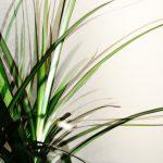 Rośliny zimową porą