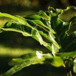 Siarka ważna dla roślin